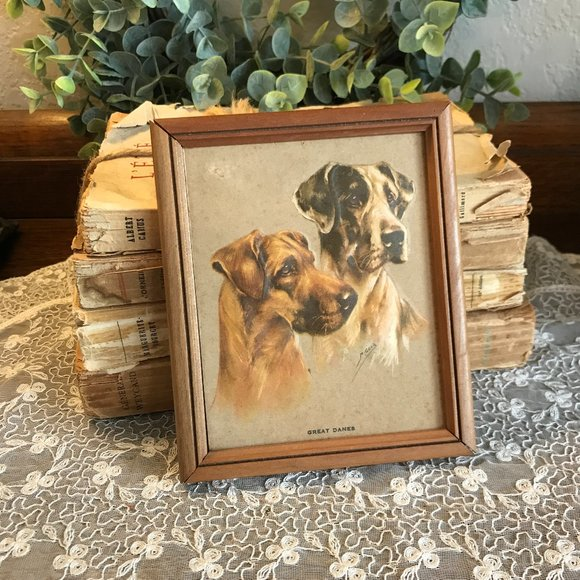 vintage 1950's Great Dane embossed picture